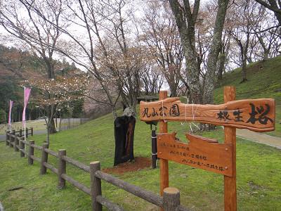 丸山公園の桜 2012.04.19