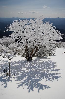 三峰山の霧氷 2013.02.25