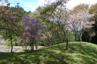 丸山公園 2013.04.25