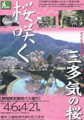 三多気の桜まつり 2013