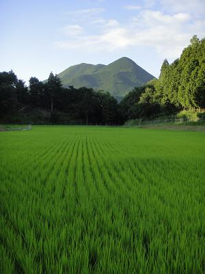 敷津から見た大洞山
